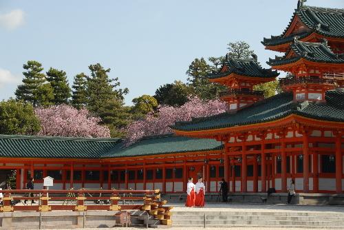 平安神宮 桜03