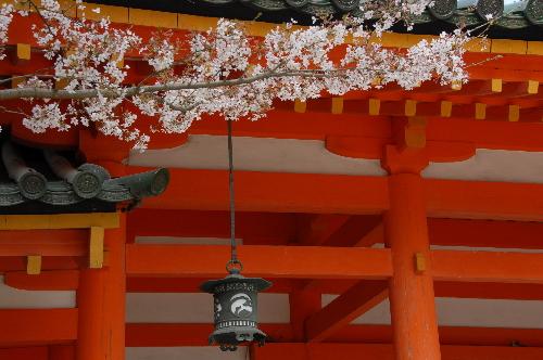 平安神宮 桜04