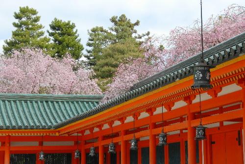 平安神宮 桜05