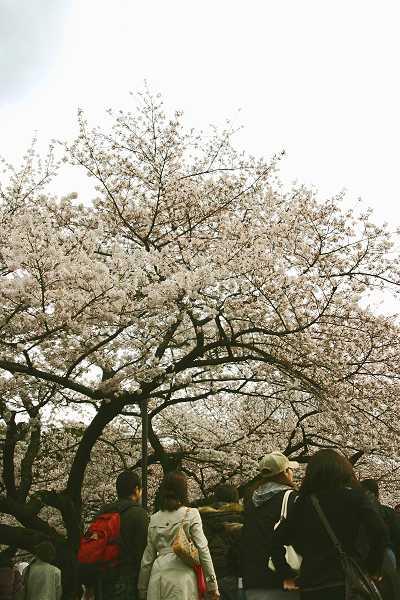chidori_09_002.jpg