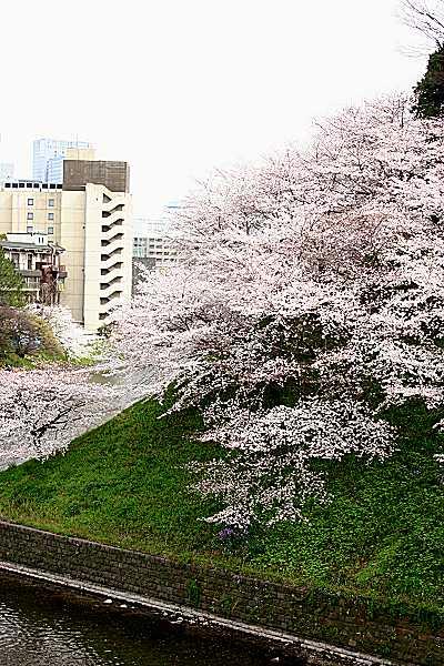 chidori_09_01.jpg