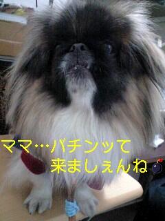 110205_1225_0001-0001.jpg