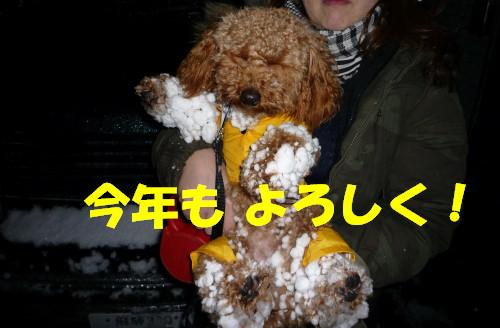 雪玉犬2_1