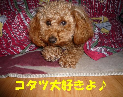 コタツ大好き_1