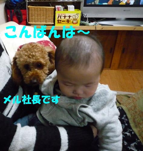 赤ちゃんがきました_1