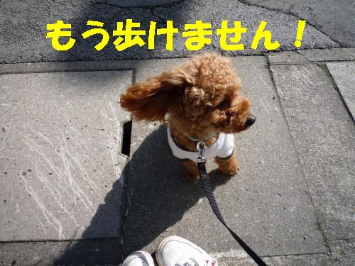 歩けまへん・・