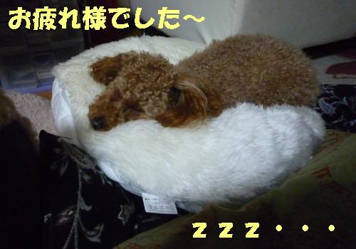 おやすみなさい_1