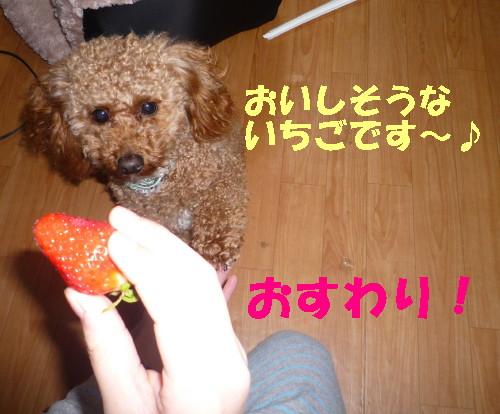 おすわり_1