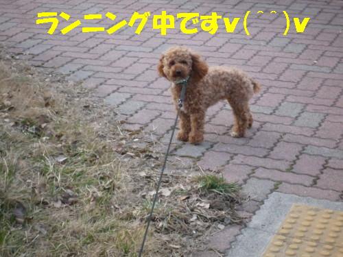 お散歩メル1