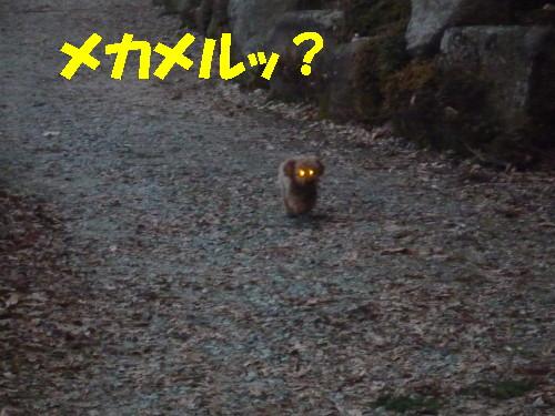 お散歩メル2