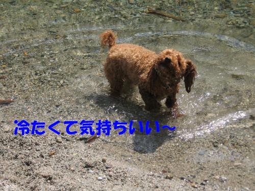あたちも水遊び_1