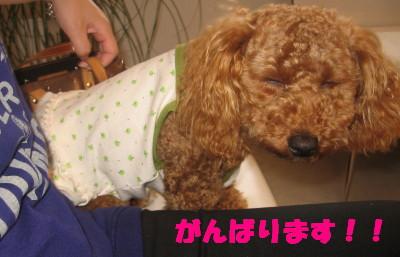 コピー (1) ~ 変顔_1