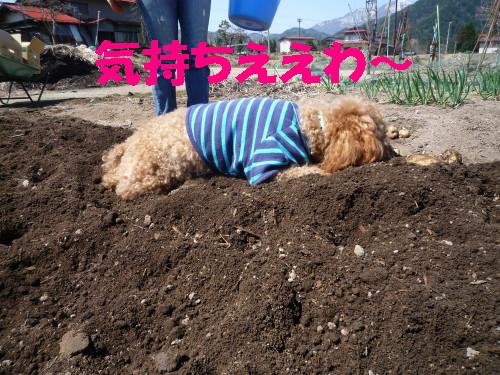 イモ掘り4