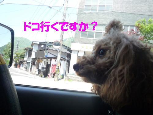 どこへ?_1