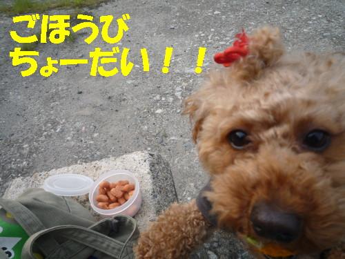 ちょーだい_1