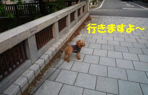 行きまっせ!_1
