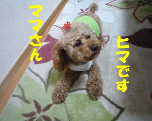 ヒマっす_1