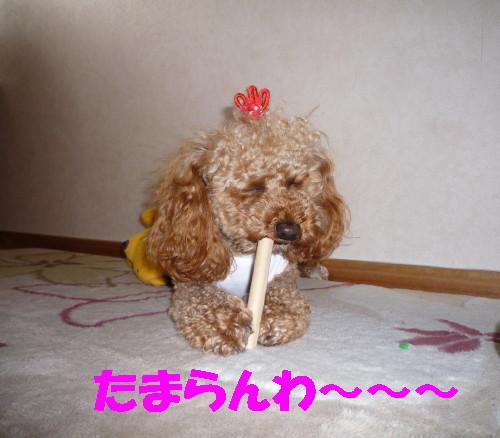 今日の変顔_1