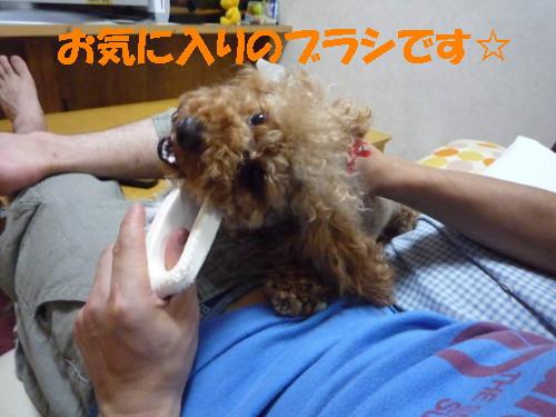ブラシ犬1
