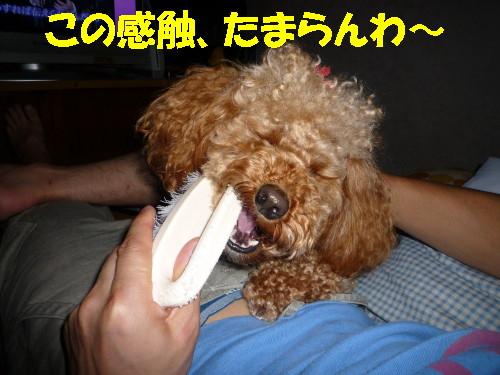 ブラシ犬2