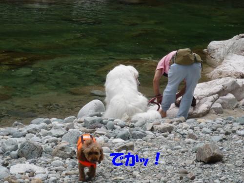 9 白熊さん