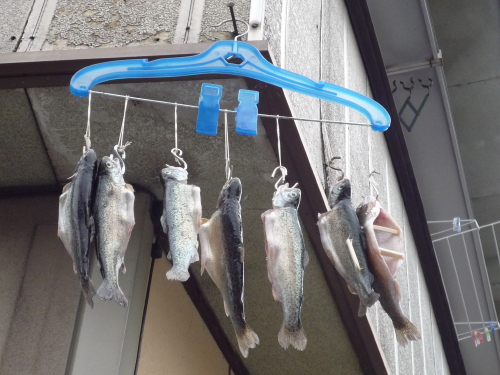 14 魚つかみ取り