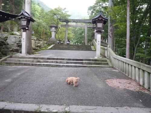 2 お散歩