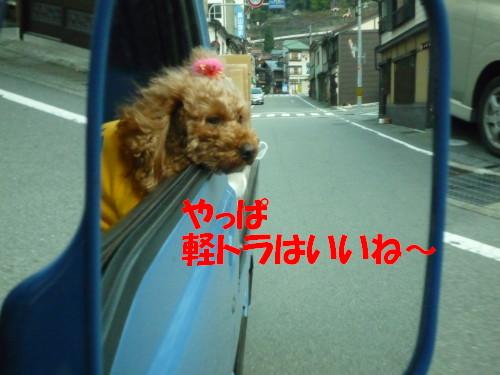 2軽トラ犬