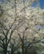 20050407_1236_0000.jpg