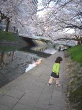 sakura-yuyu.jpg