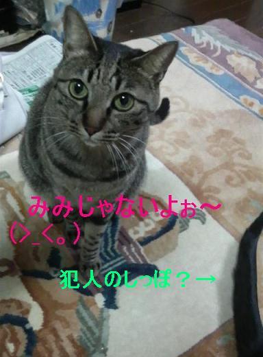 みみ11gatu19