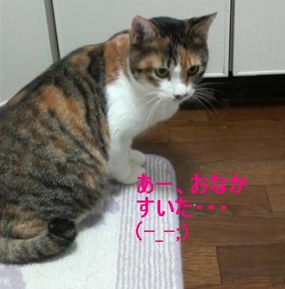 三毛ママ1