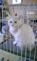 子猫 長毛白