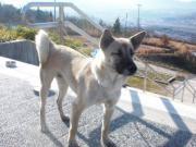 2010.2.9母犬ちゃん