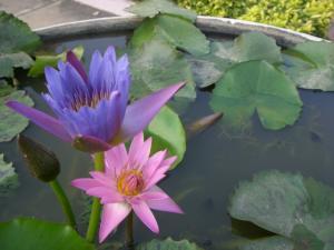 シルバーパゴダ庭の花