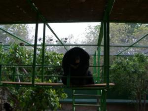 Tiger Temple 熊