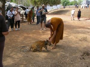 Tiger Temple お坊さんと子トラ