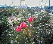 20050812161507