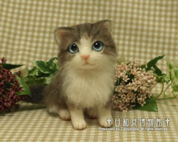 cat0911a.jpg