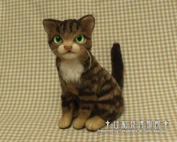 cat0913.jpg