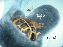 v-DSCF5984.jpg