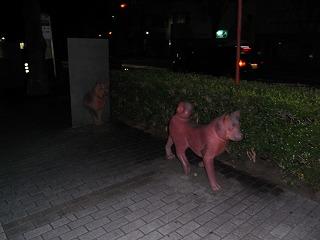 謎の犬 1