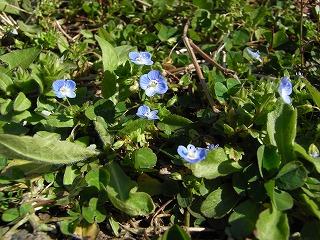 春の草花 1