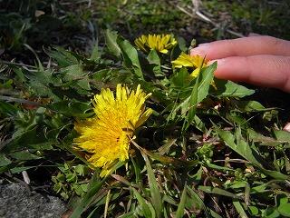 春の草花 2