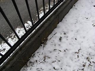 今日の雪です