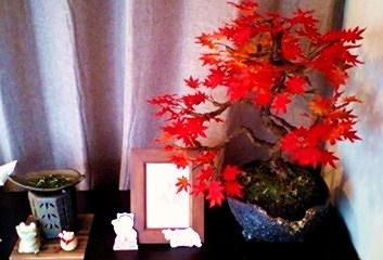 田村さんの紅葉2