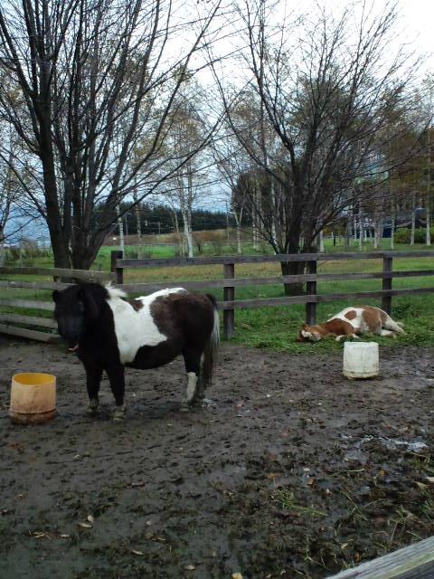 やる気ない馬