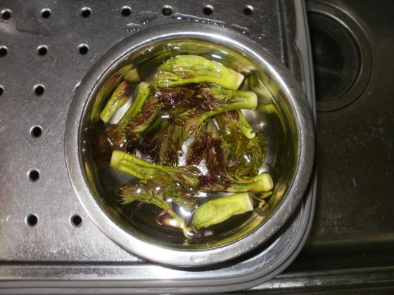 天ぷら用のタランボの芽はアク抜きのために水に晒します。