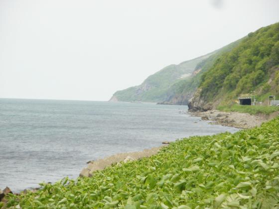 国道231号沿いに見える日本海
