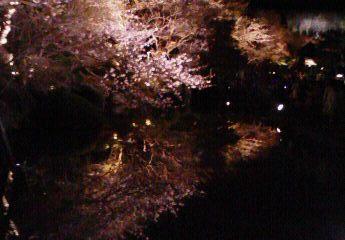 京都桜02